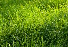 Plan rapproché de champ d'herbe de ressort photographie stock libre de droits