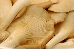 Plan rapproché de champignon de couche images stock
