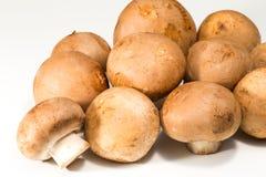 Plan rapproché de champignon frais Photographie stock