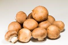 Plan rapproché de champignon frais Photo libre de droits