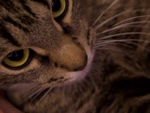 Plan rapproché de chat Photo stock