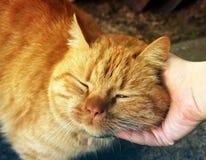 Plan rapproché de chat Main frottant un chat photographie stock libre de droits