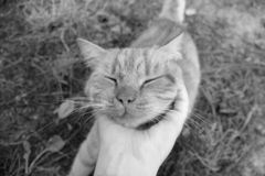 Plan rapproché de chat Main frottant un chat photo libre de droits