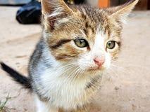 Plan rapproché de chaton Photographie stock