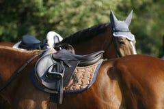 Plan rapproché de cheval sautant d'exposition pendant la formation Photographie stock