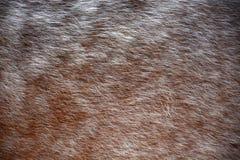 Plan rapproché de cheveux de cheval Photos stock