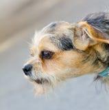 Plan rapproché de chien photographie stock libre de droits