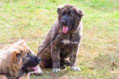 Plan rapproché de chien de garde Images libres de droits