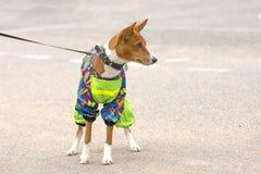 Plan rapproché de chien de garde Photo libre de droits