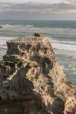 Plan rapproché de colonie de fou de Bassan d'élevage sur la roche Photo stock