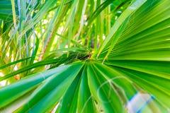 Plan rapproché de congé de palmier Couleurs vives images libres de droits