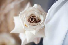 Plan rapproché de couleur en pastel de Rose Image stock