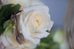 Plan rapproché de couleur en pastel de Rose Photographie stock libre de droits