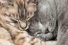 Plan rapproché de deux chats de sommeil Photographie stock