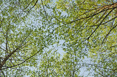 Plan rapproché de deux ou trois arbres Photographie stock