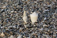Plan rapproché de différents coquillages colorés Fond de Seashell Texture des coquillages colorés photo stock