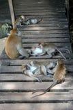 Plan rapproché de famille de singe Photographie stock libre de droits