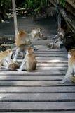Plan rapproché de famille de singe Photos libres de droits