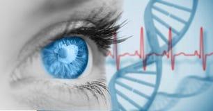 Plan rapproché de femme avec l'oeil bleu Images libres de droits