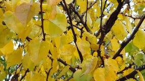 plan rapproché de feuilles d'automne Bois colorés de forêt d'automne banque de vidéos