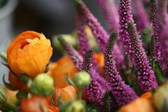 Plan rapproché de fleur Photographie stock libre de droits