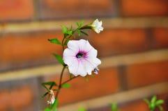 Plan rapproché de fleur Image libre de droits