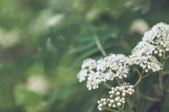 Plan rapproché de fleur d'arbre fruitier photos libres de droits