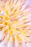 Plan rapproché de fleur de nature Photos libres de droits