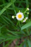 Plan rapproché de fleur de pissenlit en parc photographie stock