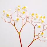 Plan rapproché de fleurs blanches Photos stock