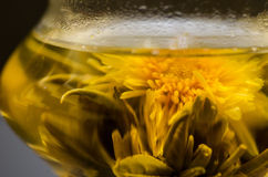 Plan rapproché de floraison de thé image libre de droits