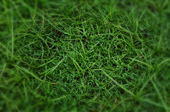 Plan rapproché de fond d'herbe Photo libre de droits