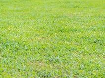 Plan rapproché de fond d'herbe verte Photos stock