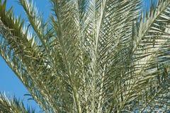Plan rapproché de fond de palmiers Pris un jour ensoleillé Photo stock
