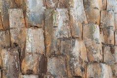 Plan rapproché de fond de texture d'écorce de palmier Photographie stock libre de droits