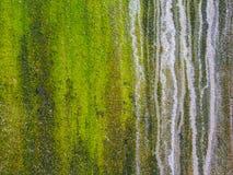 Plan rapproché de fond et de boke texturisés verts approximatifs Images stock