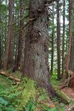 Plan rapproché de forêt Images stock