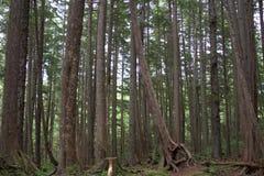 Plan rapproché de forêt Photo libre de droits