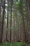 Plan rapproché de forêt Images libres de droits