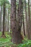 Plan rapproché de forêt Image libre de droits