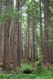Plan rapproché de forêt Photographie stock