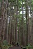Plan rapproché de forêt Photos stock