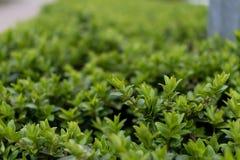 Plan rapproché de fougère verte photo stock