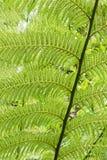 Plan rapproché de fougères, jardins de Heligan, les Cornouailles, R-U photographie stock
