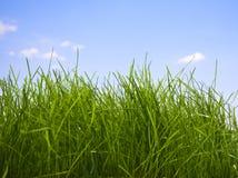 Plan rapproché de fragment propre de pelouse image libre de droits