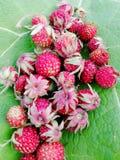 Plan rapproché de fraise photos stock