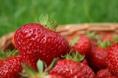 Plan rapproché de fraise dans un panier Images libres de droits