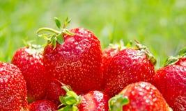 Plan rapproché de fraises sur le fond vert Photos libres de droits