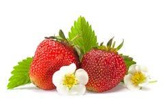 Plan rapproché de fruit de fraise sur le blanc Photo libre de droits