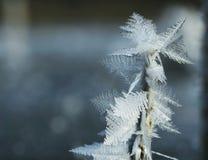 Plan rapproché de gel Photographie stock libre de droits